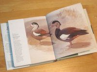 Elphic_kobayashi_crested_shelduck